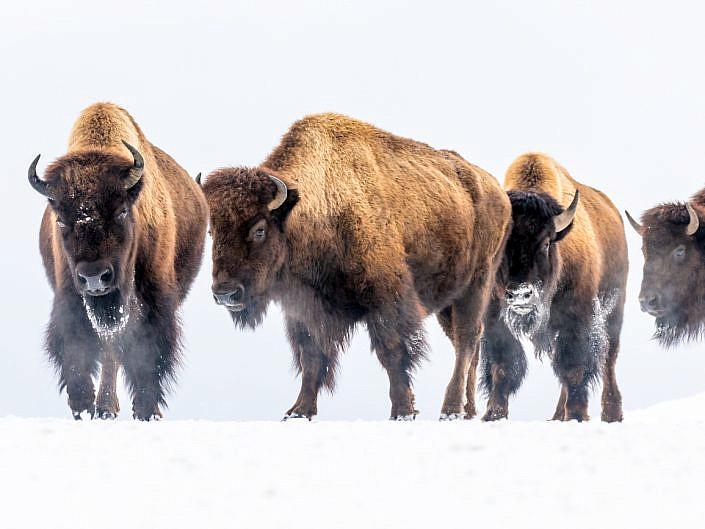 USA (Yellowstone)